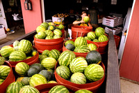 Watermelons! Aug 10, 2012